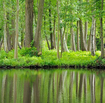 International Biosphere Reserves「River landscape in the Spreewald, southeast of the state of Brandenburg, Germany」:スマホ壁紙(10)