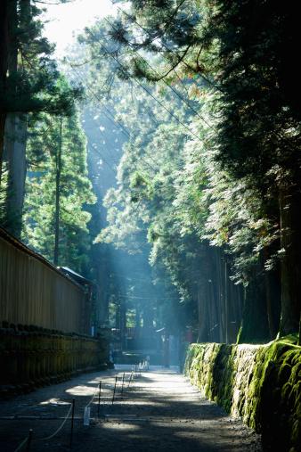Nikko City「A road around a shrine,Nikko.」:スマホ壁紙(14)