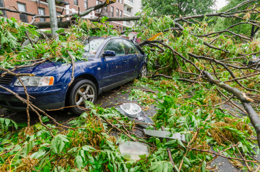 Accidents and Disasters「USA, New York, Brooklyn, Car smashed by fallen tree」:スマホ壁紙(0)