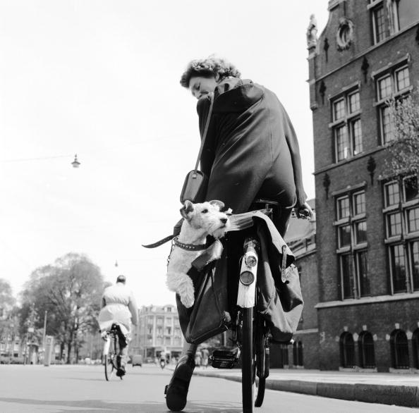 Netherlands「Doggy Bag」:写真・画像(1)[壁紙.com]