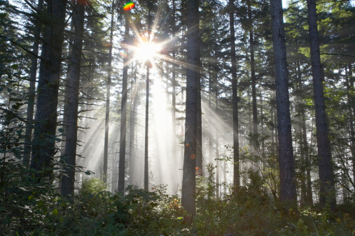 star sky「Sunlight breaking through trees in forest (lens flare)」:スマホ壁紙(14)