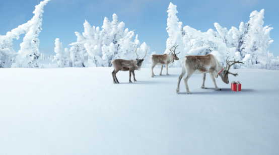 reindeer「three reindeer check out a Christmas gift 」:スマホ壁紙(6)
