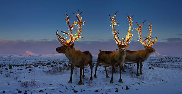 Three reindeers with lights in antlers (digital composite):スマホ壁紙(壁紙.com)