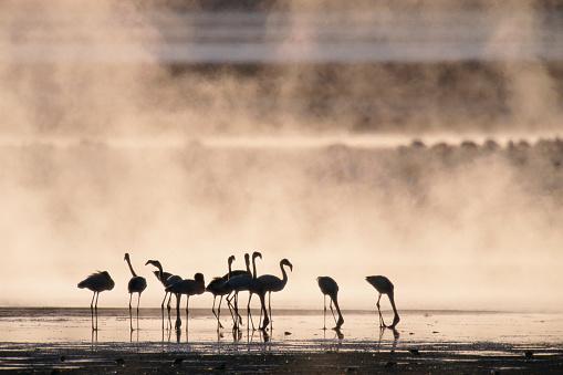 Lake Bogoria National Park「Lesser Flamingos in Kenya」:スマホ壁紙(15)