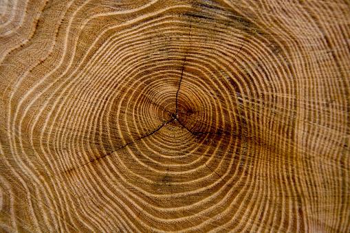 Tree Ring「Tree Rings of a Stump」:スマホ壁紙(19)