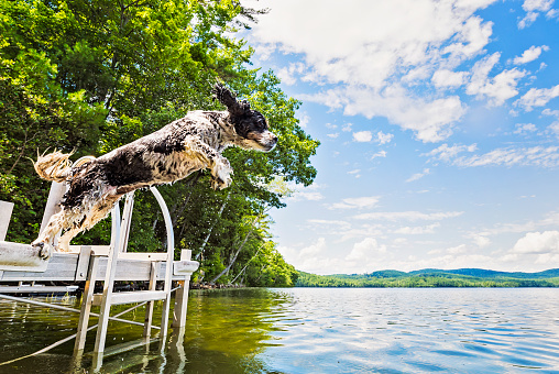 Mid-Air「Dog jumping into lake from jetty」:スマホ壁紙(7)