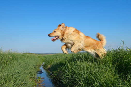 Carefree「Dog jumping over ditch」:スマホ壁紙(3)