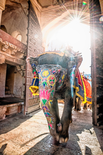 Rajasthan「Elephant entering Amber Fort with tourist」:スマホ壁紙(1)