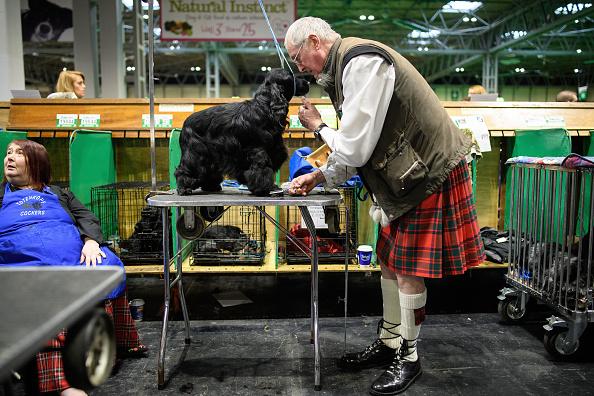 ベストオブ「2018 Crufts Dog Show Day Four - Best In Show」:写真・画像(13)[壁紙.com]