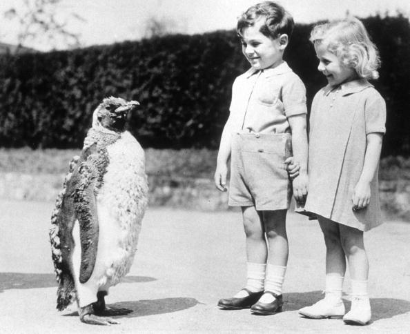 動物「Penguin Parade」:写真・画像(18)[壁紙.com]