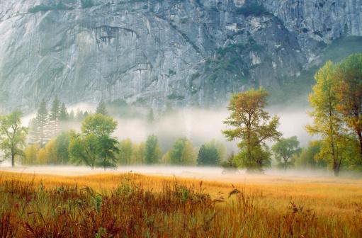 秋「Fog in a forest, Yosemite National Park, Mariposa County, California, USA」:スマホ壁紙(2)