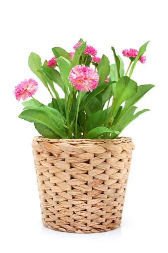 Silk「Flower in woven pot isolated on white background」:スマホ壁紙(2)
