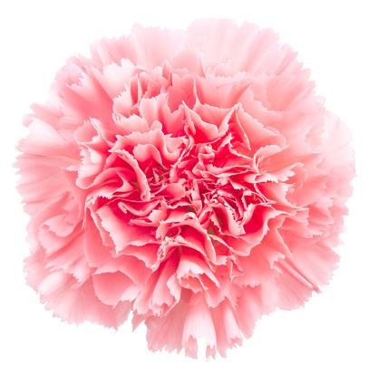 Floral Pattern「Carnation」:スマホ壁紙(5)