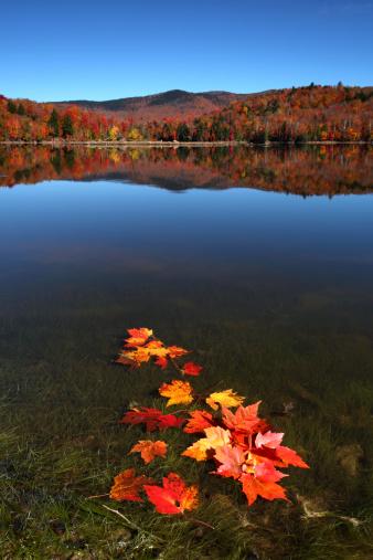紅葉「Autumn lake with red maple leaves and reflection」:スマホ壁紙(19)