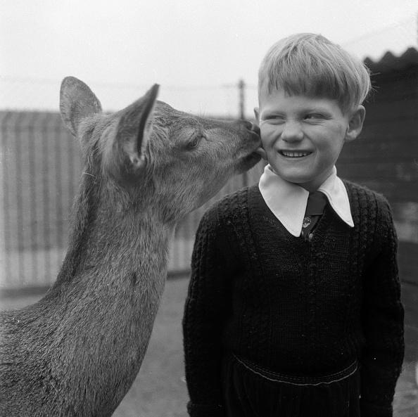 animal「Deer Friend」:写真・画像(18)[壁紙.com]