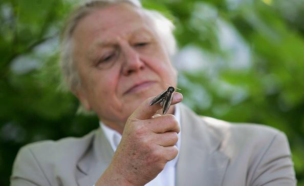 animal「Sir David Attenborough Launches National Moth Recording Scheme at london Zoo」:写真・画像(7)[壁紙.com]
