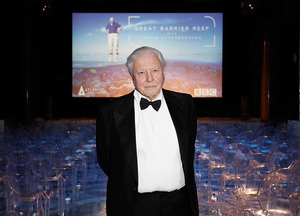 Film Screening「Great Barrier Reef With David Attenborough - Inside Shots From Private Screening At Australia House Of Sir David Attenborough's Latest Work」:写真・画像(9)[壁紙.com]