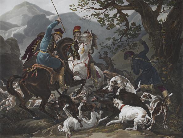 Wild Boar「The Wild Boar Hunting In Poland」:写真・画像(19)[壁紙.com]