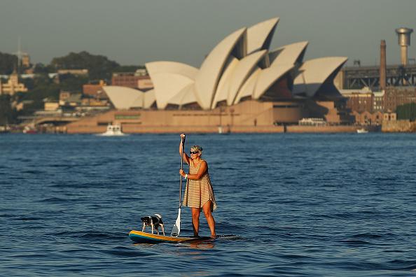 animal「Sydney Harbour Plays Host To Cruise Ship Spectacular」:写真・画像(19)[壁紙.com]