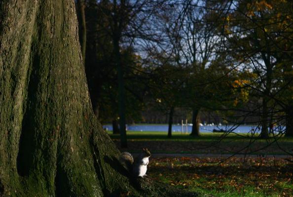 Squirrel「Hyde Park Winter Sunshine」:写真・画像(6)[壁紙.com]