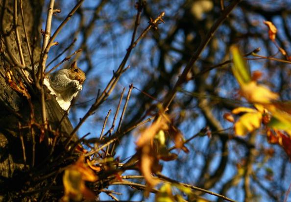 Squirrel「Hyde Park Winter Sunshine」:写真・画像(7)[壁紙.com]