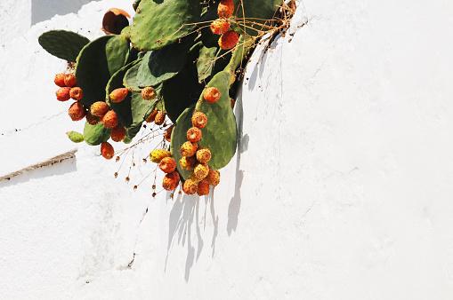 パトモス島「Barbary figs」:スマホ壁紙(18)