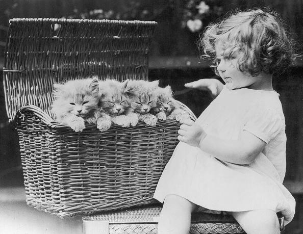 Kitten「Kitten Basket」:写真・画像(9)[壁紙.com]