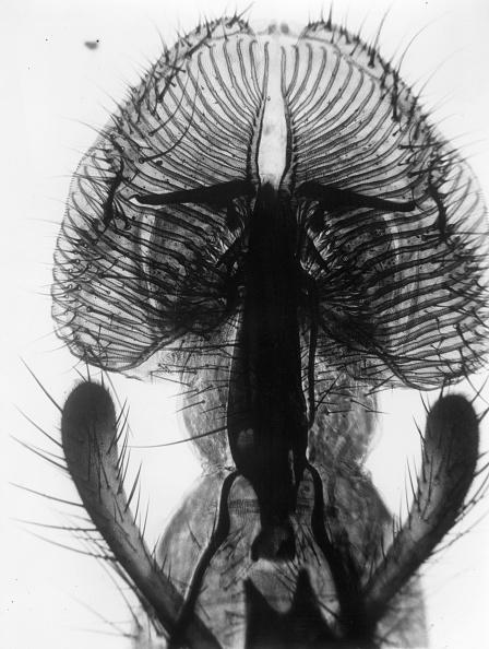 Symmetry「Fly Proboscis」:写真・画像(14)[壁紙.com]