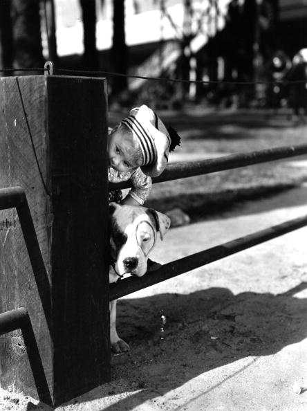 Comedy Film「Spanky's Pup」:写真・画像(13)[壁紙.com]
