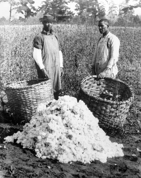 アーカイブ画像「Cotton Pickers」:写真・画像(14)[壁紙.com]