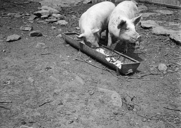 Trough「Pig's Dinner」:写真・画像(17)[壁紙.com]