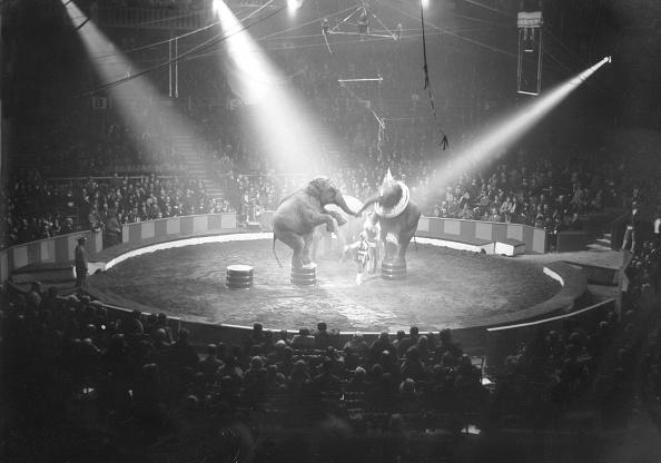 サーカス「Circus Elephants」:写真・画像(6)[壁紙.com]