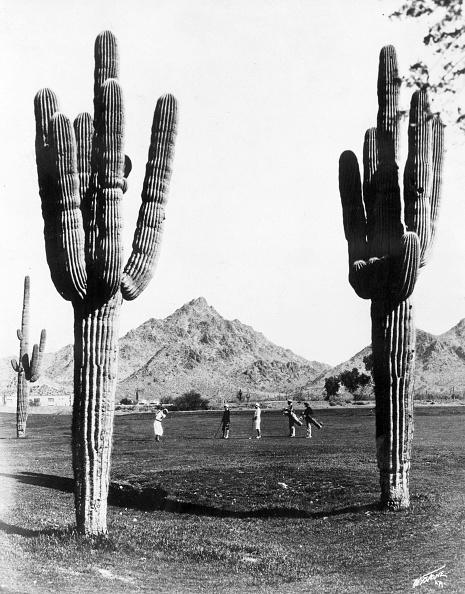 Extreme Terrain「Golf In The Desert」:写真・画像(18)[壁紙.com]