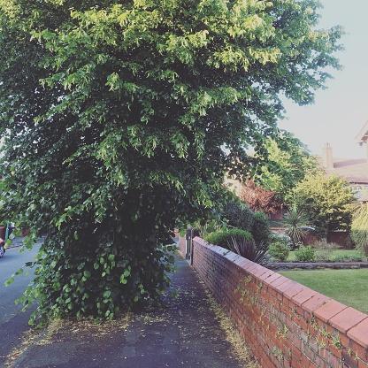 Battle「Lime Tree on suburban road」:スマホ壁紙(1)