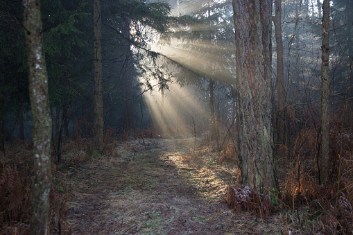 Recreational Horseback Riding「Sun lit path through the forest」:スマホ壁紙(11)