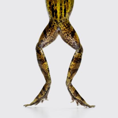 North Holland「frog legs and bottom」:スマホ壁紙(8)