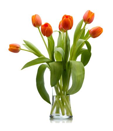 チューリップ「7 レッドオレンジチューリップの新鮮なカットのガラスの花瓶絶縁型」:スマホ壁紙(12)