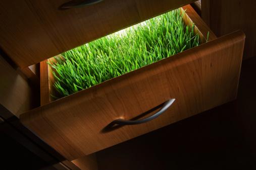 Glowing「green drawer」:スマホ壁紙(15)