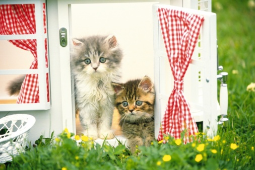 ペルシャネコ「Two Persian Cats In a Little Dollhouse, Looking Sideways, Front View, Differential Focus」:スマホ壁紙(11)