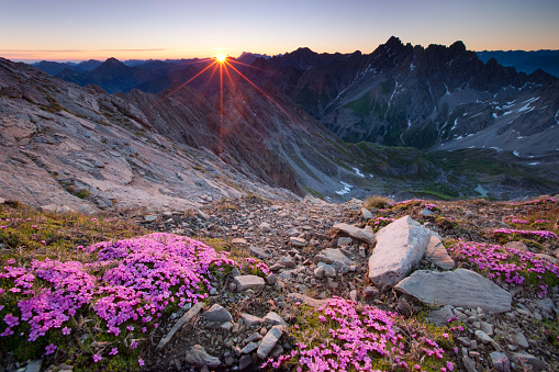 Lech Valley「alpine sunrise with flowers in the foreground」:スマホ壁紙(4)