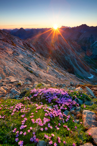 Lech Valley「alpine sunrise with flowers in the foreground」:スマホ壁紙(12)