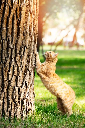 Kitten「Cute cat under sunshine at park」:スマホ壁紙(6)