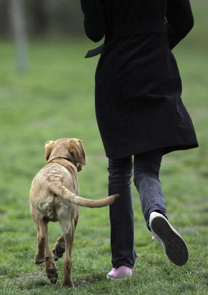 Walking「New Laws For Pet Welfare To Come Into Force」:写真・画像(18)[壁紙.com]
