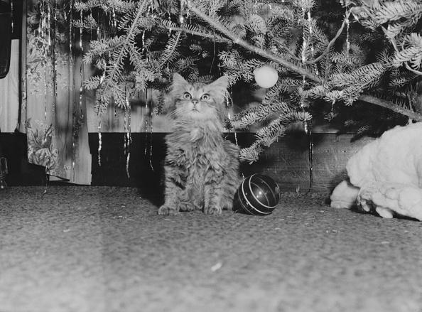 Retro Style「Kitten Under Christmas Tree」:写真・画像(16)[壁紙.com]