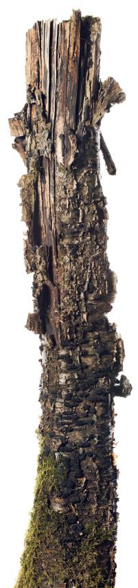 Log「Stump」:スマホ壁紙(3)