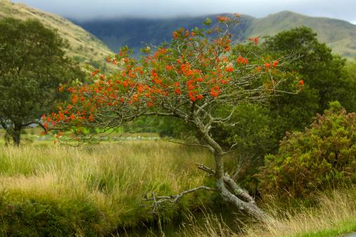 Rowan Tree「Snowdonia National Park」:スマホ壁紙(13)