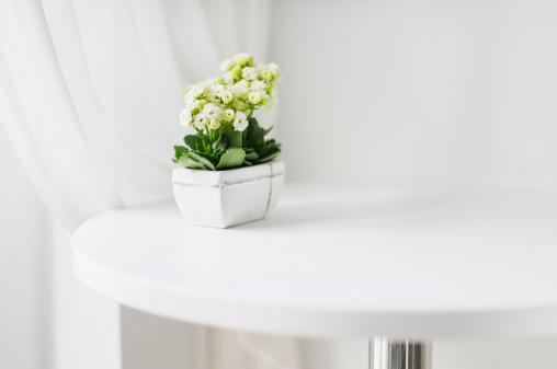 植物「Pure flower plant on white coffee table」:スマホ壁紙(12)