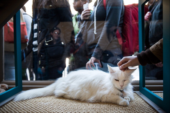 動物「Pop Up Cat Cafe Opens In Manhattan」:写真・画像(17)[壁紙.com]
