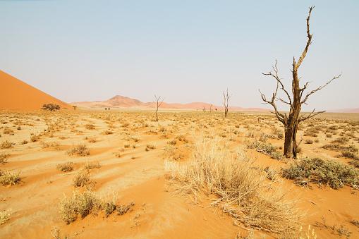 Namibian Desert「Namibian Desert」:スマホ壁紙(11)