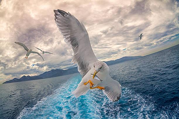Seagull fishing:スマホ壁紙(壁紙.com)